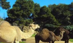 Le parc zoologique et des loisirs de Ben Aknoun