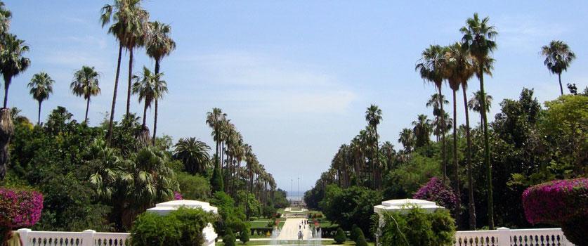 Le Jardin d'Essai d'Alger